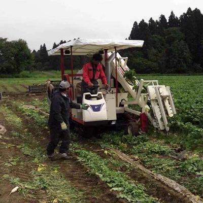 男农业项目