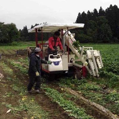 大连男农业项目